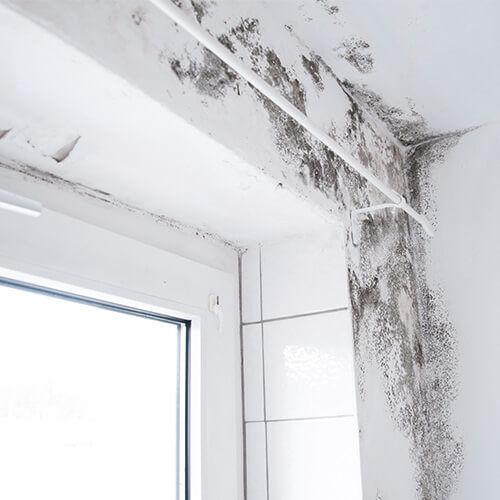Rental Properties And Asbestos